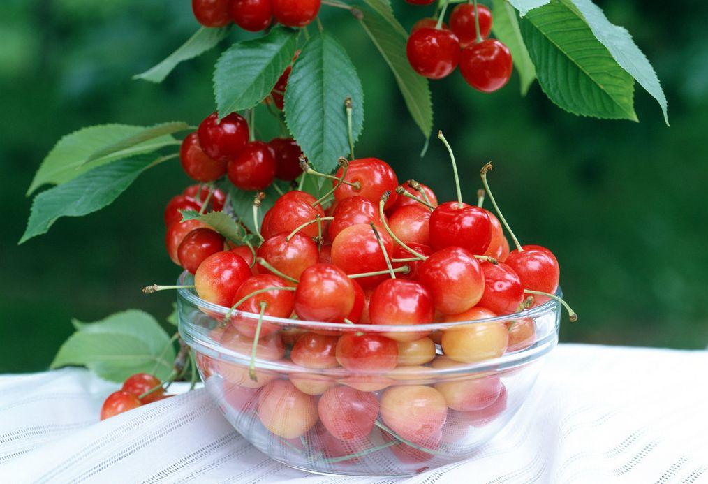 自考食品营养与卫生专业